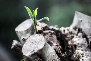 grow-781769_960_720