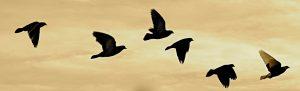 birds leader