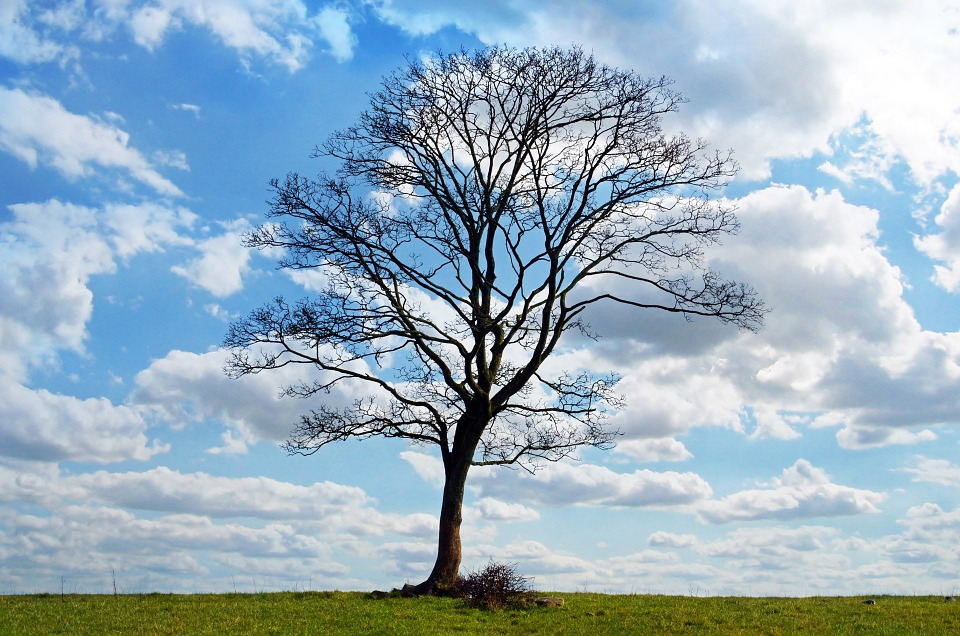 What Bare Trees Can Teach Us About Vulnerability ...